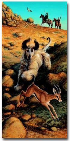 Afghan Hound Art prints, Posters & Paintings