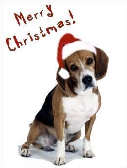Beagles @ DogBreed-Gifts.com - Beagle Christmas