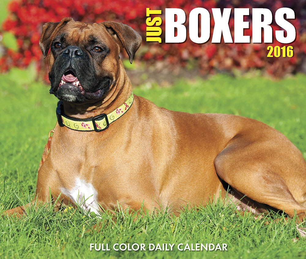 Pics Photos - Dog Breeds Scary Boxer Dogs Boxer Dog Boxer Dog Scary ...