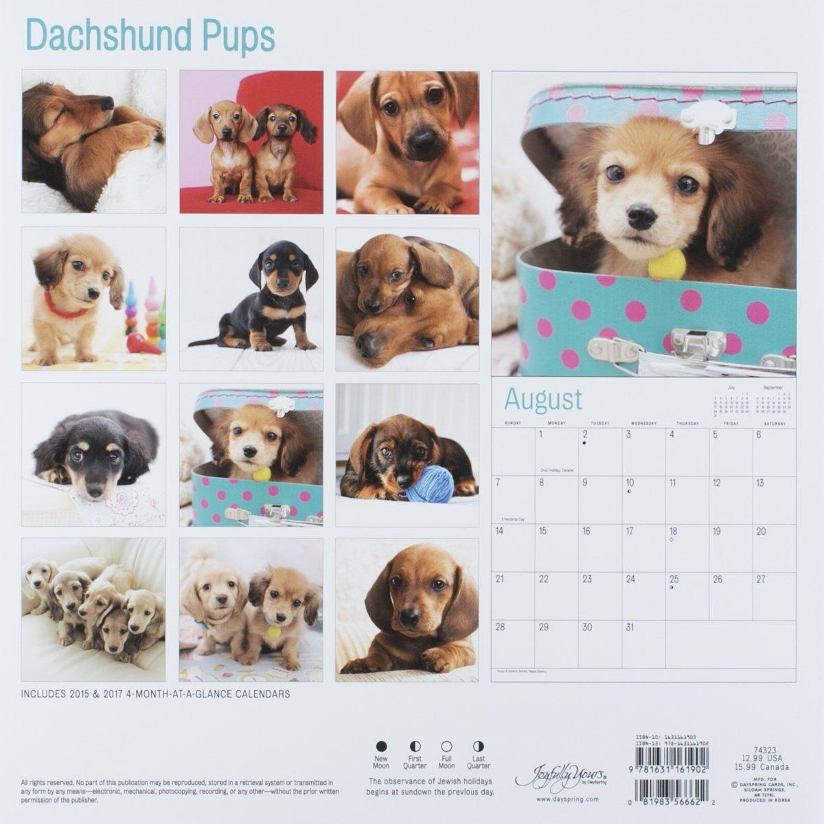 Dachshund @ DogBreed-Gifts.com - Dachshund Calendars