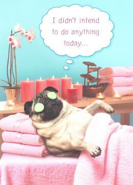 Click Here For To Visit Their Store Pug Birthday Card