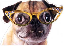 Click Here Please Pug In Glasses Birthday Card