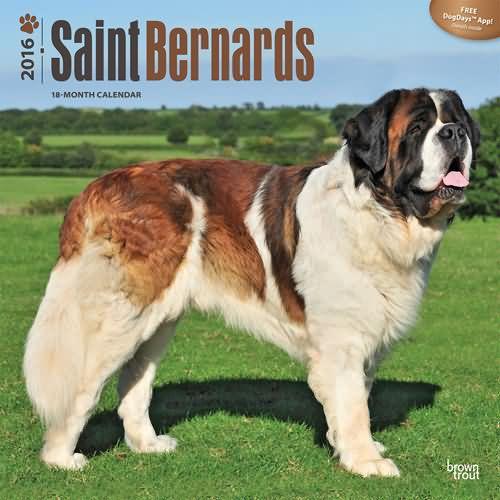 ... Calendars: Saint Bernard and Saint Bernard puppies calendars 2016