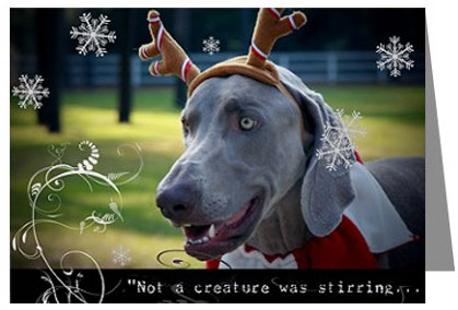 The Weimaraner Shop Christmas cards and Holiday decor – Weimaraner Birthday Cards